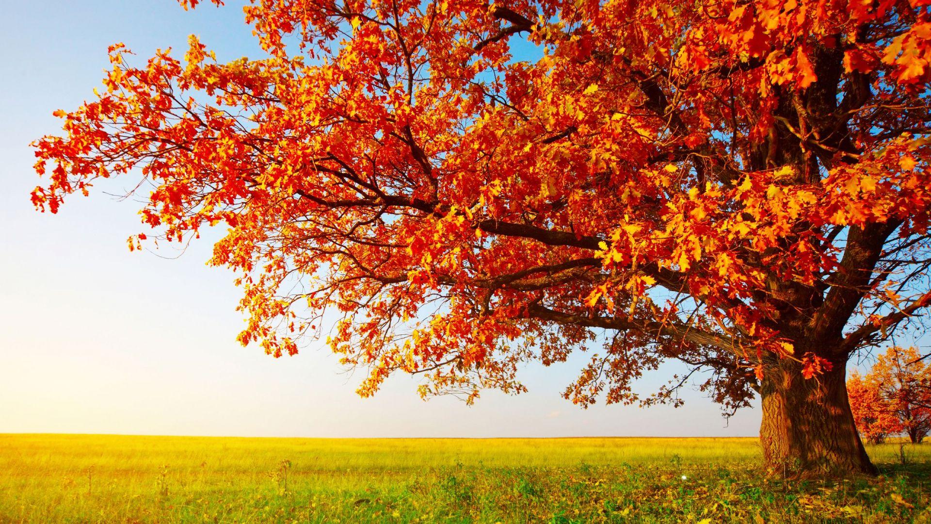orange tree autumn