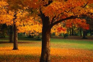orange tree nature