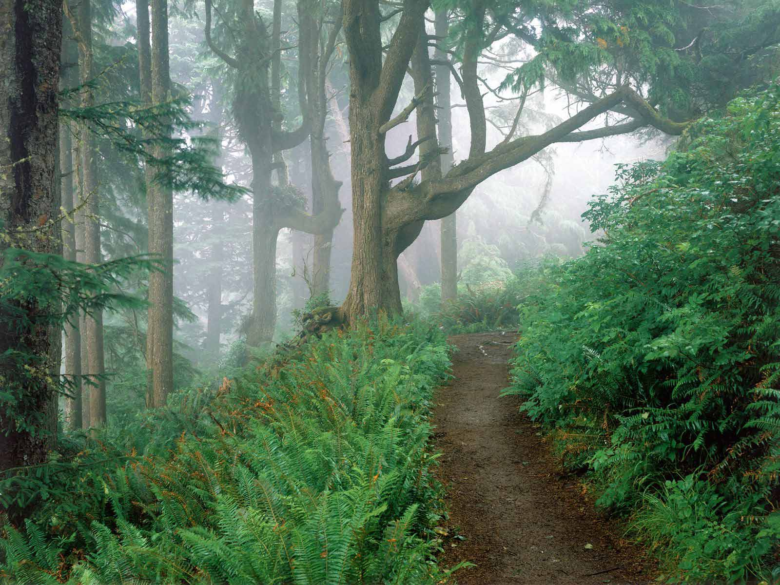 oregon wallpaper jungle path