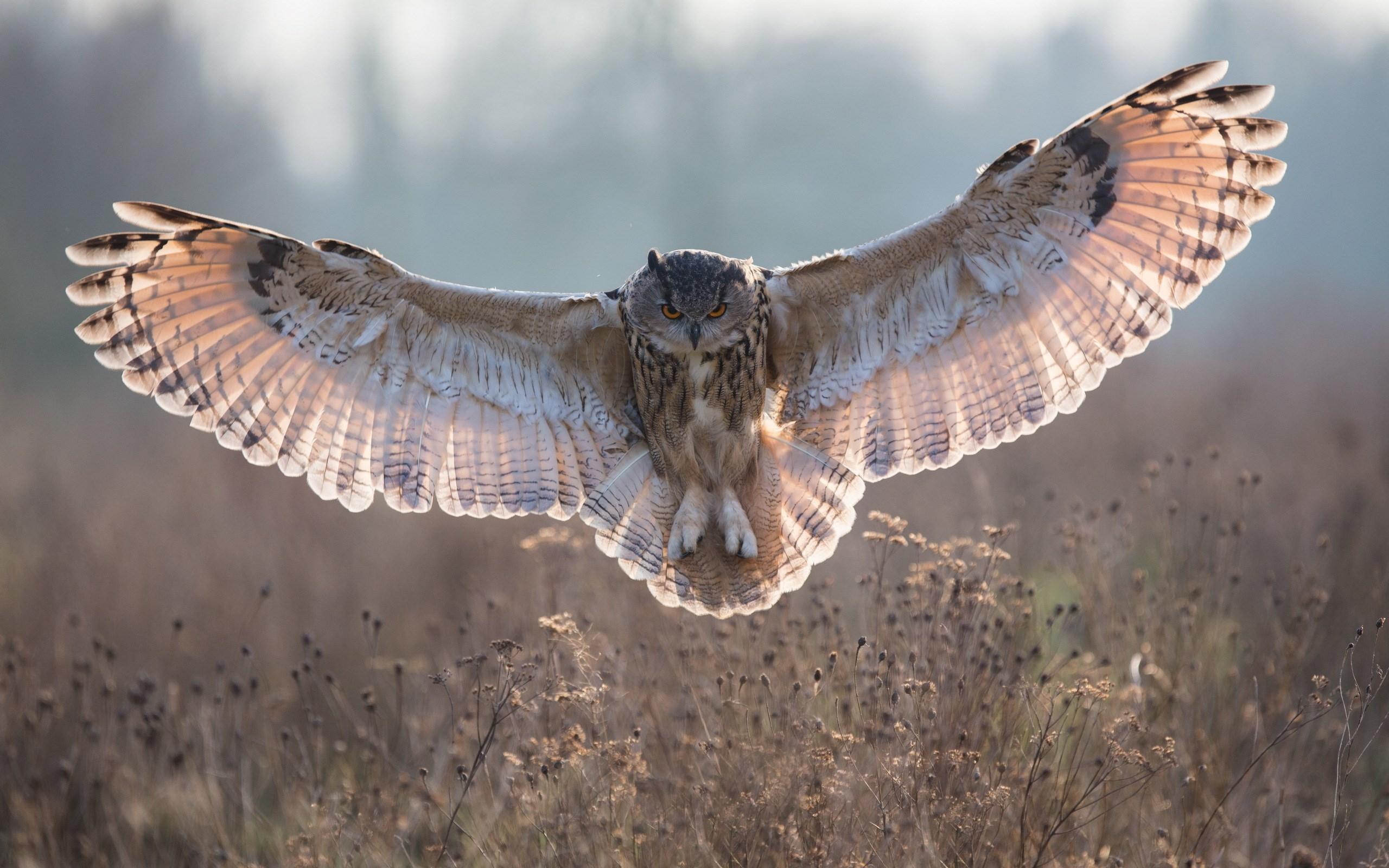 owl A10