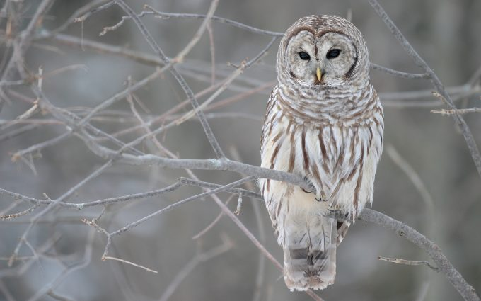 owl backgrounds download