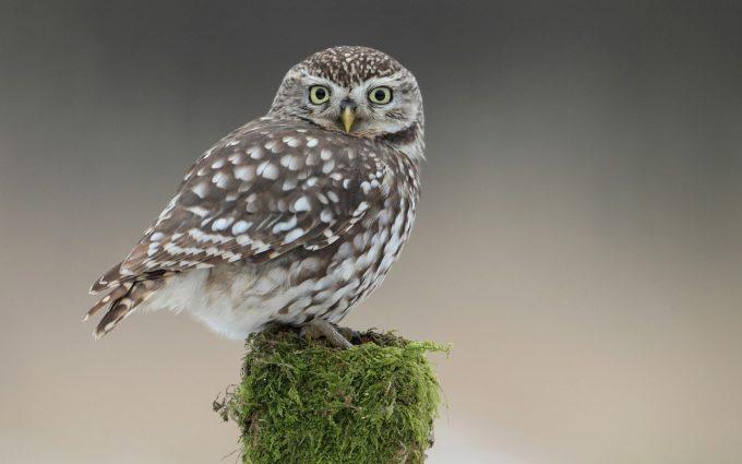 owl cute lovely