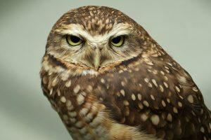 owl eyes cute