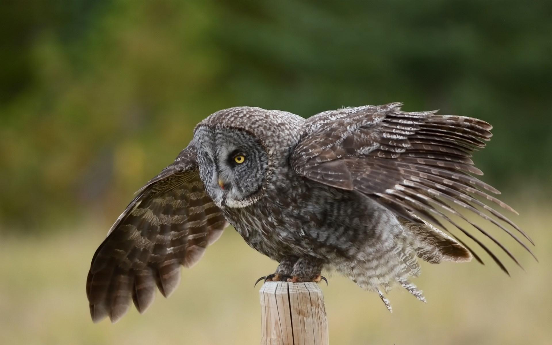 owl hd A2