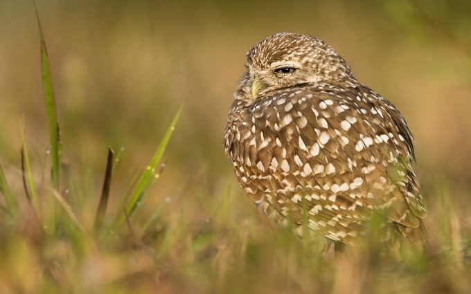 owl hd A3
