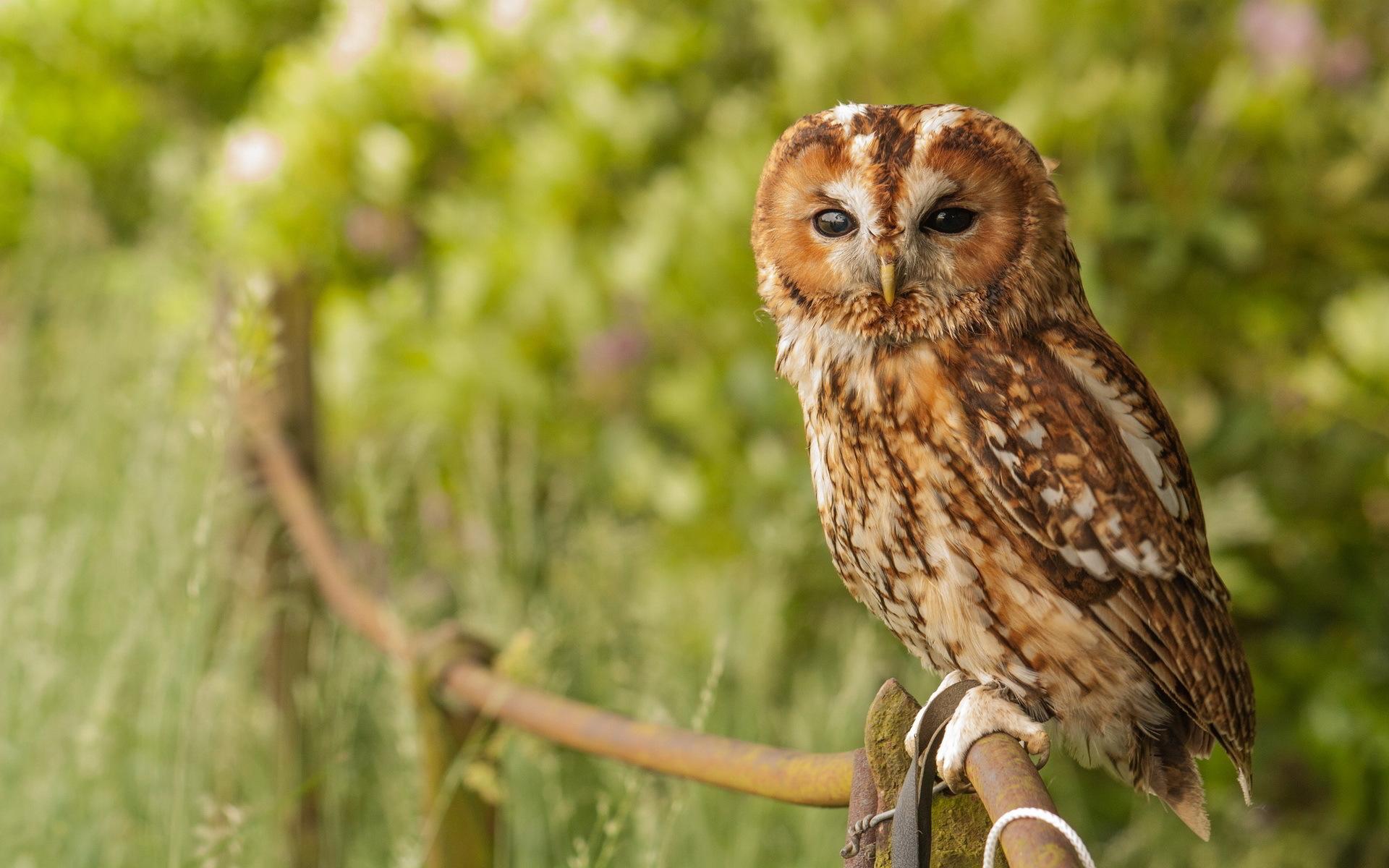 owl hd A7