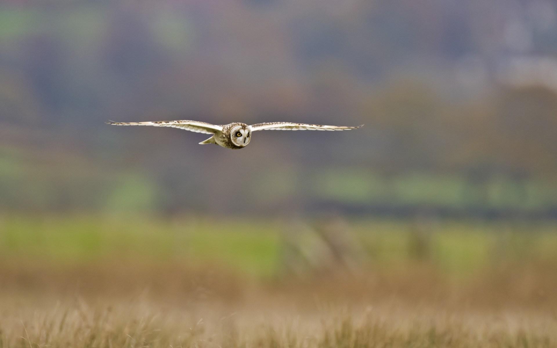 owl image hd