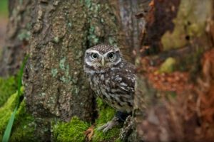 owl picture hd