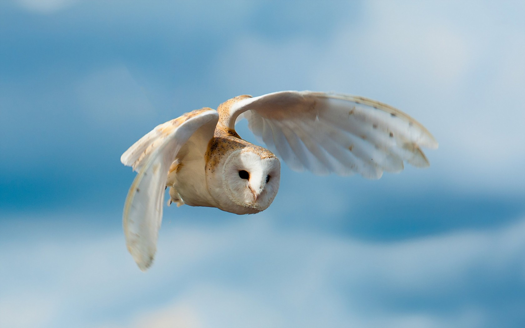 owls wallpapers