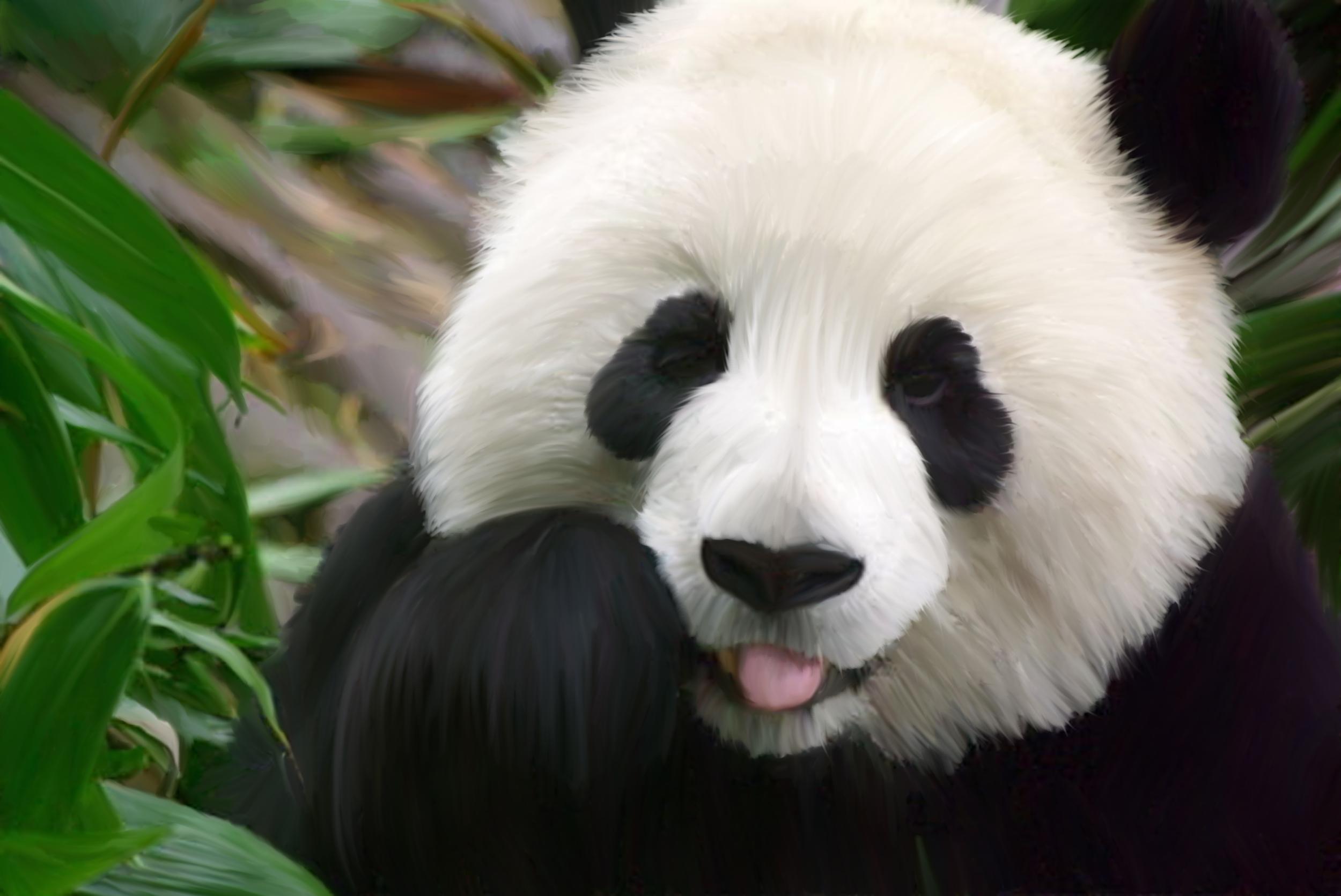 panda desktop wallpaper