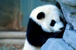 pandas background