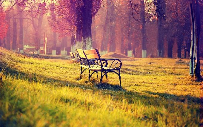 park wallpaper benches