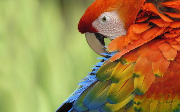 parrot bird photos
