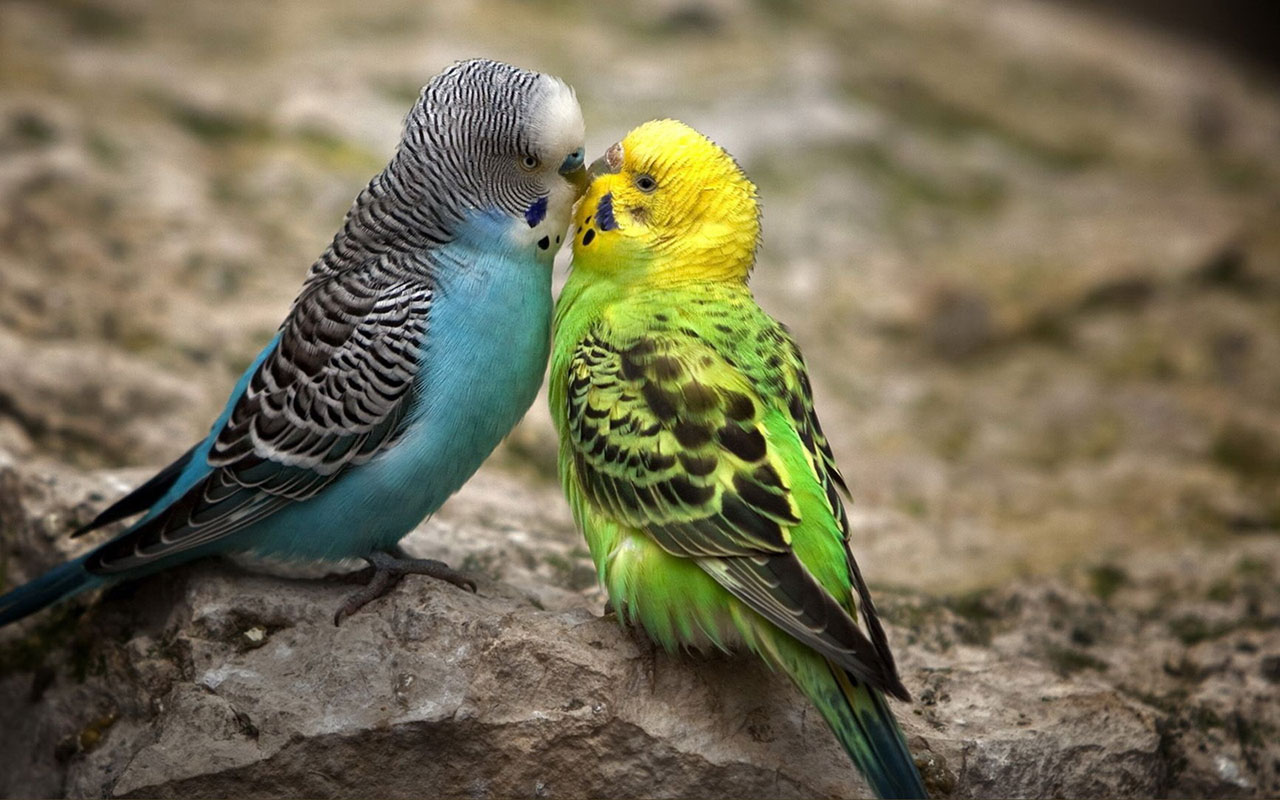 parrot images free