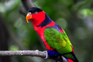parrot pictures free