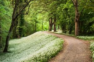 path wallpaper park