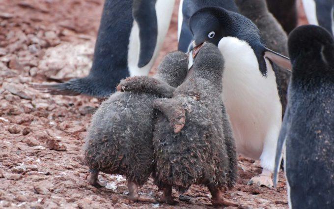 penguin wallpaper 1080p