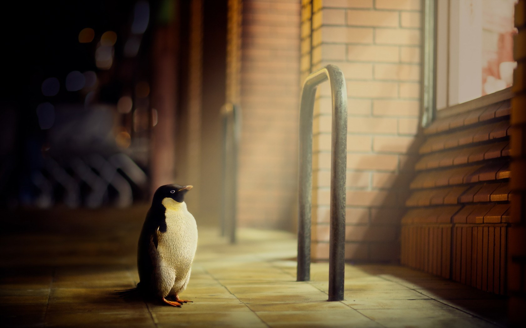 penguin wallpaper abstract