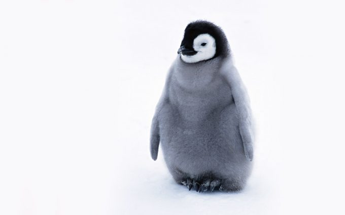 penguin wallpaper arctic