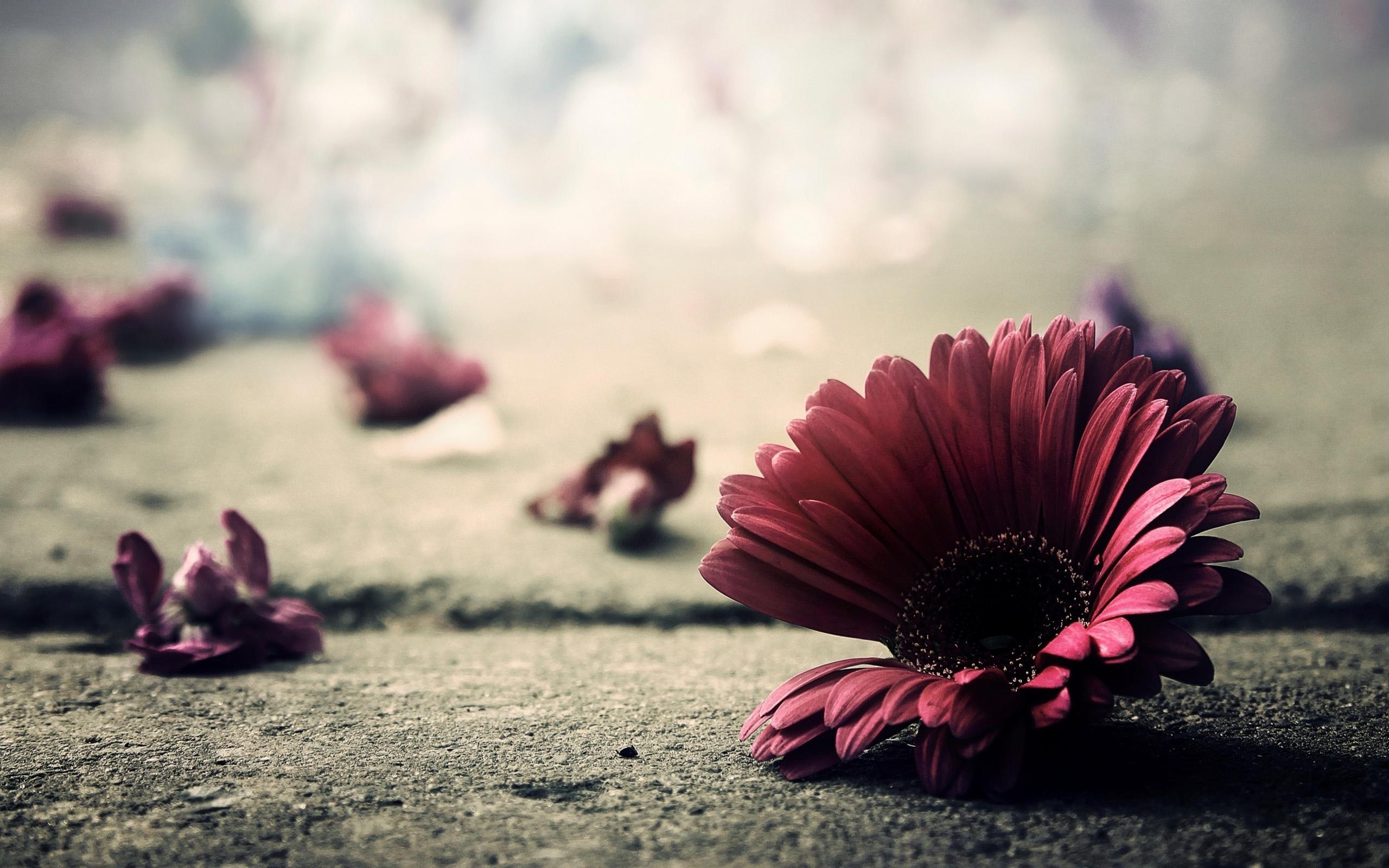 petals wallpaper