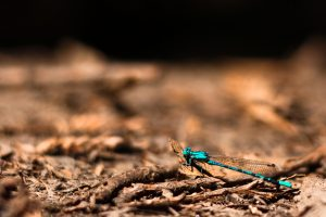 pics of dragonfly
