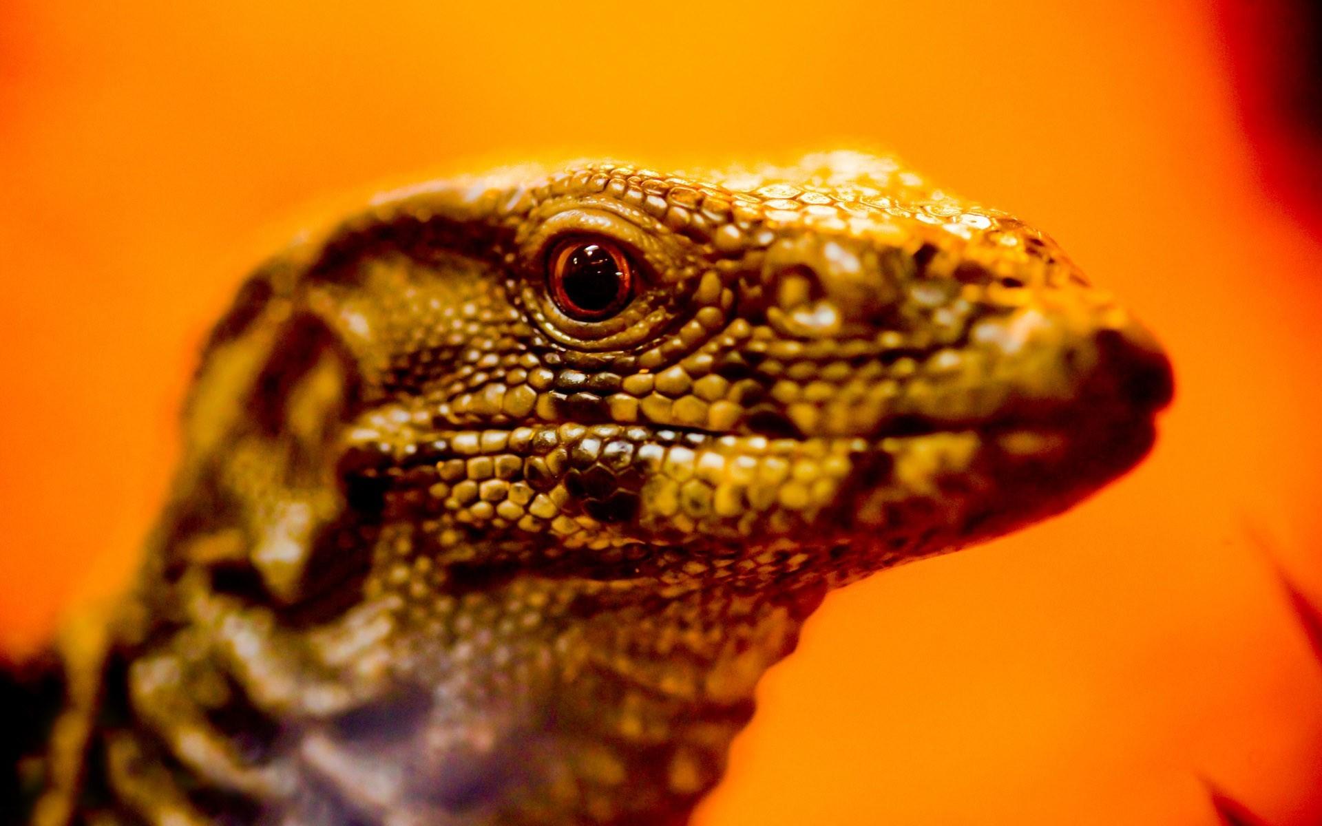 pics of lizards