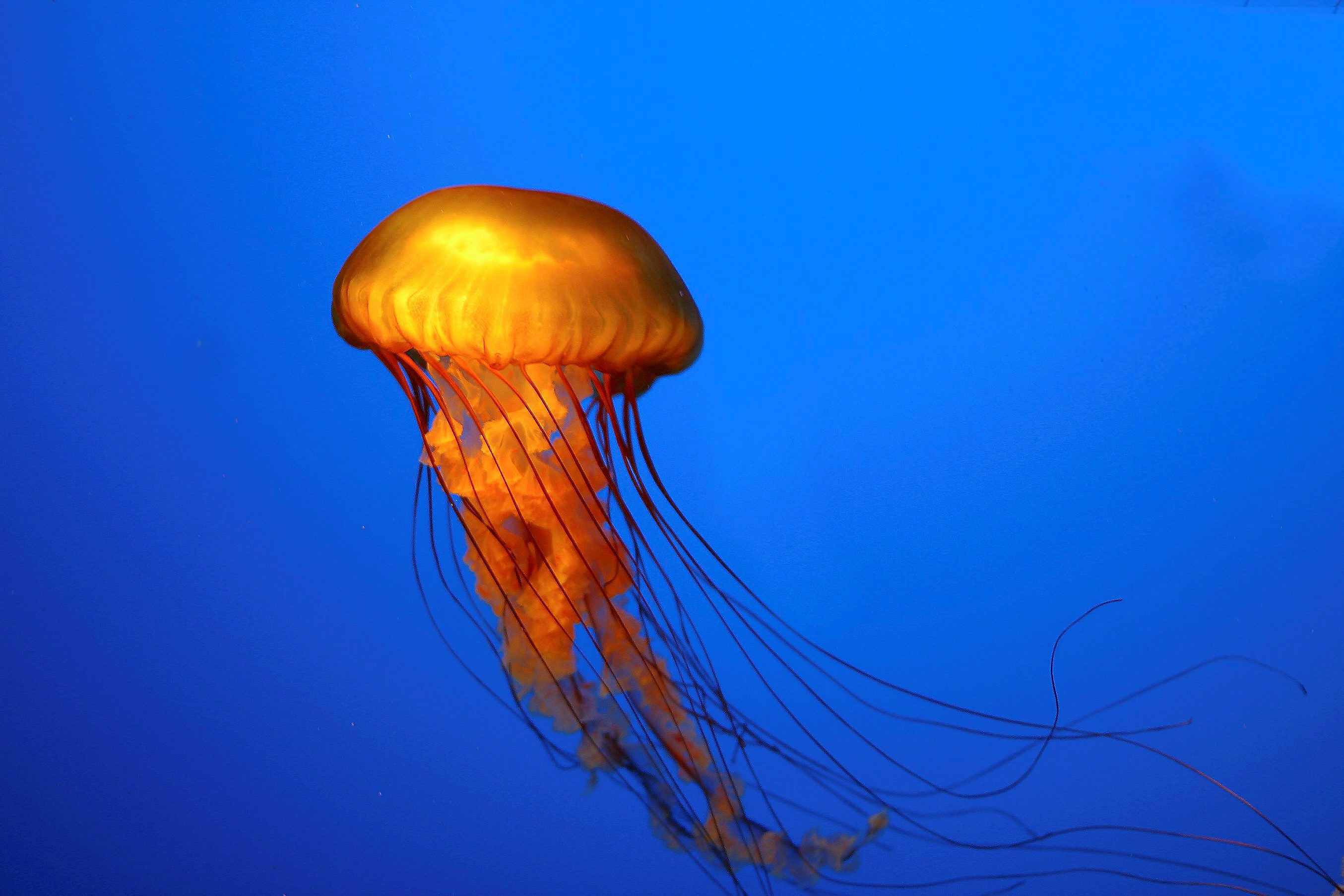 Jellyfish Facts