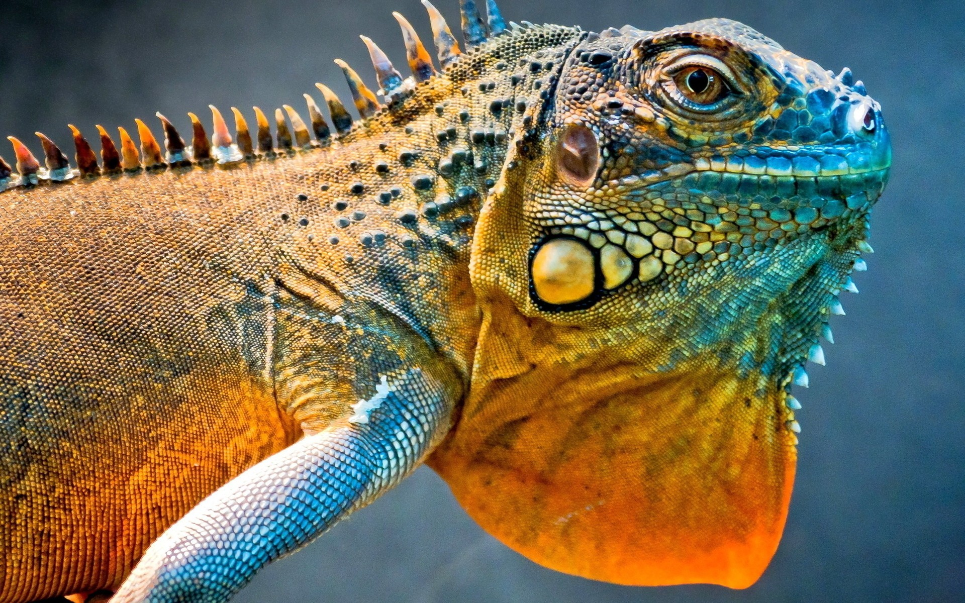 picture of lizard