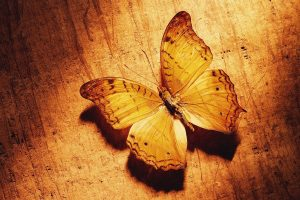 pictures of a butterfly