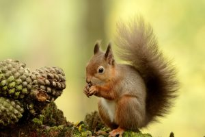 pictures of baby squirrels