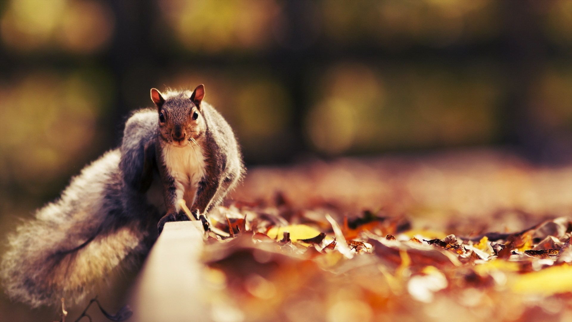 pictures of cute squirrels