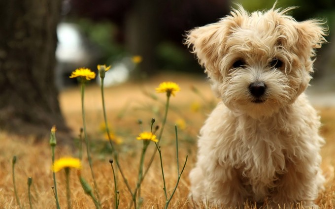 pictures of dogs hd