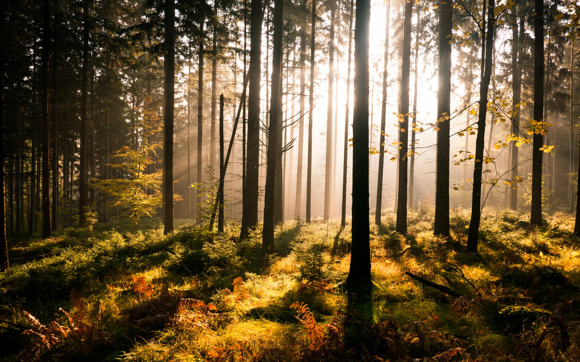 pictures of forests sun