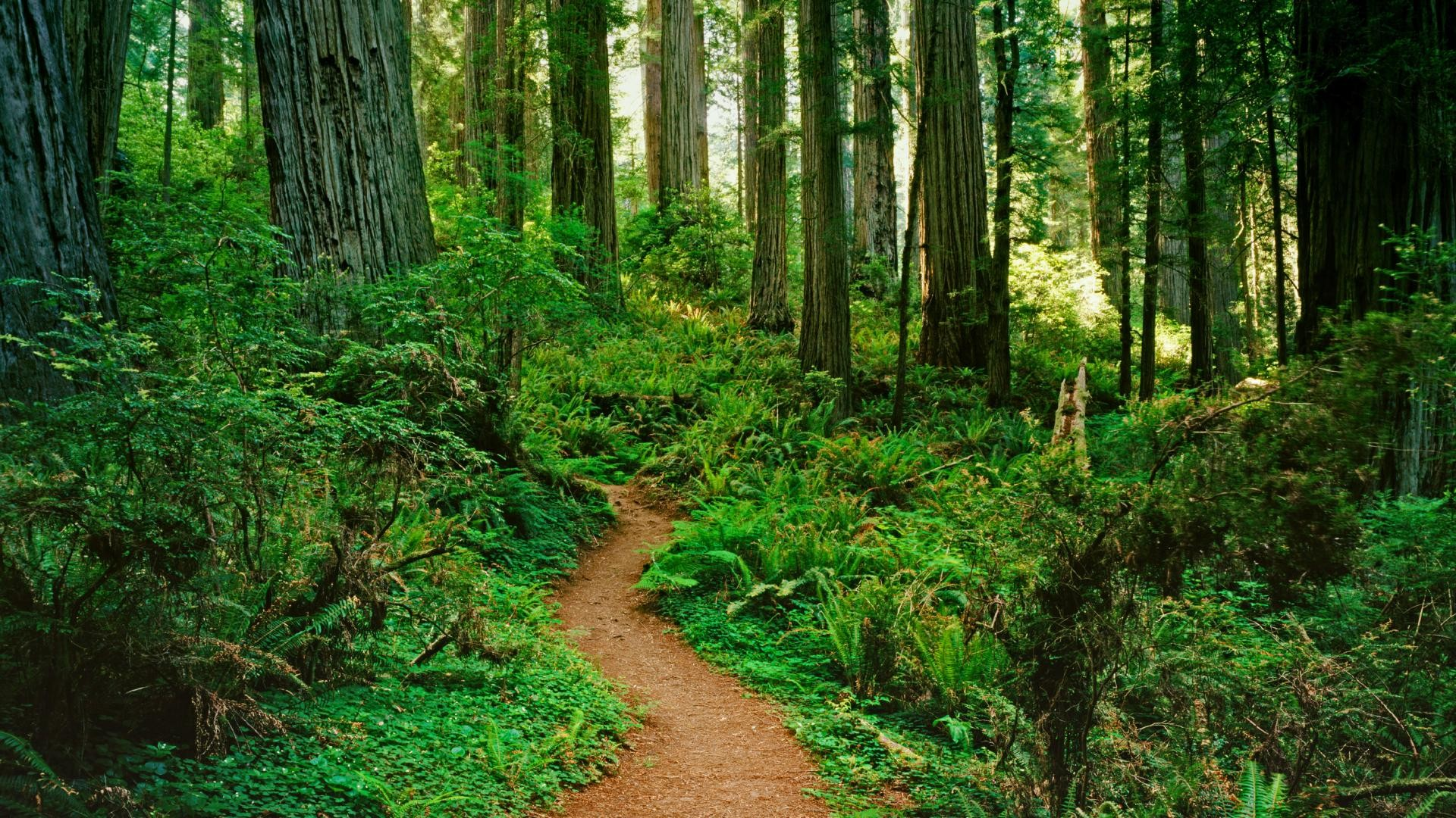 pictures of forests