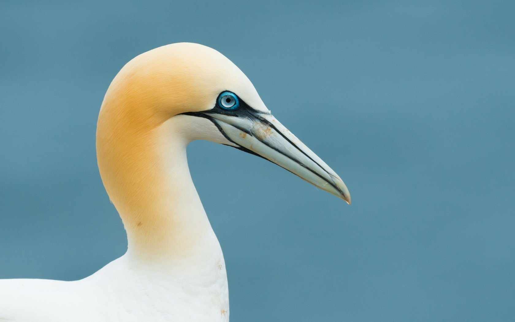 pictures of sea birds