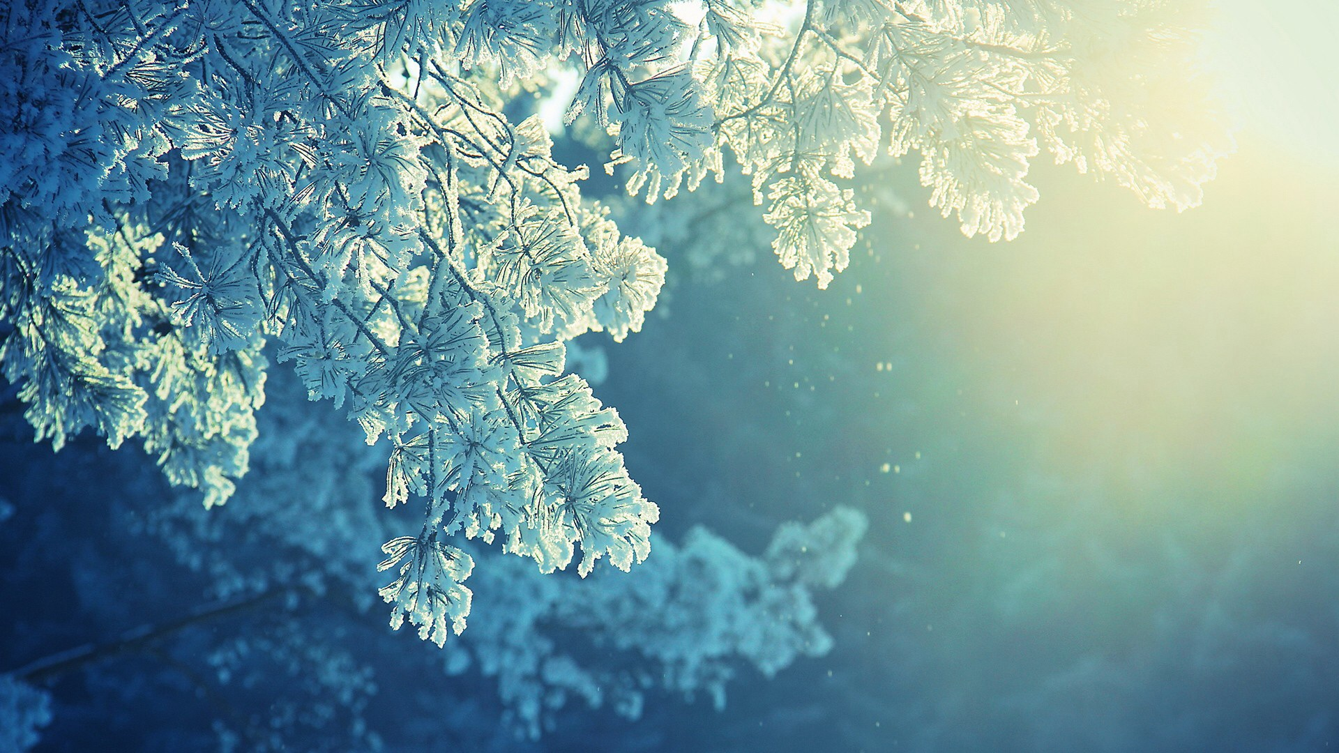 pine wallpaper snow