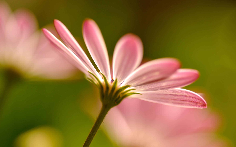 pink flower abstract - HD Desktop Wallpapers | 4k HD