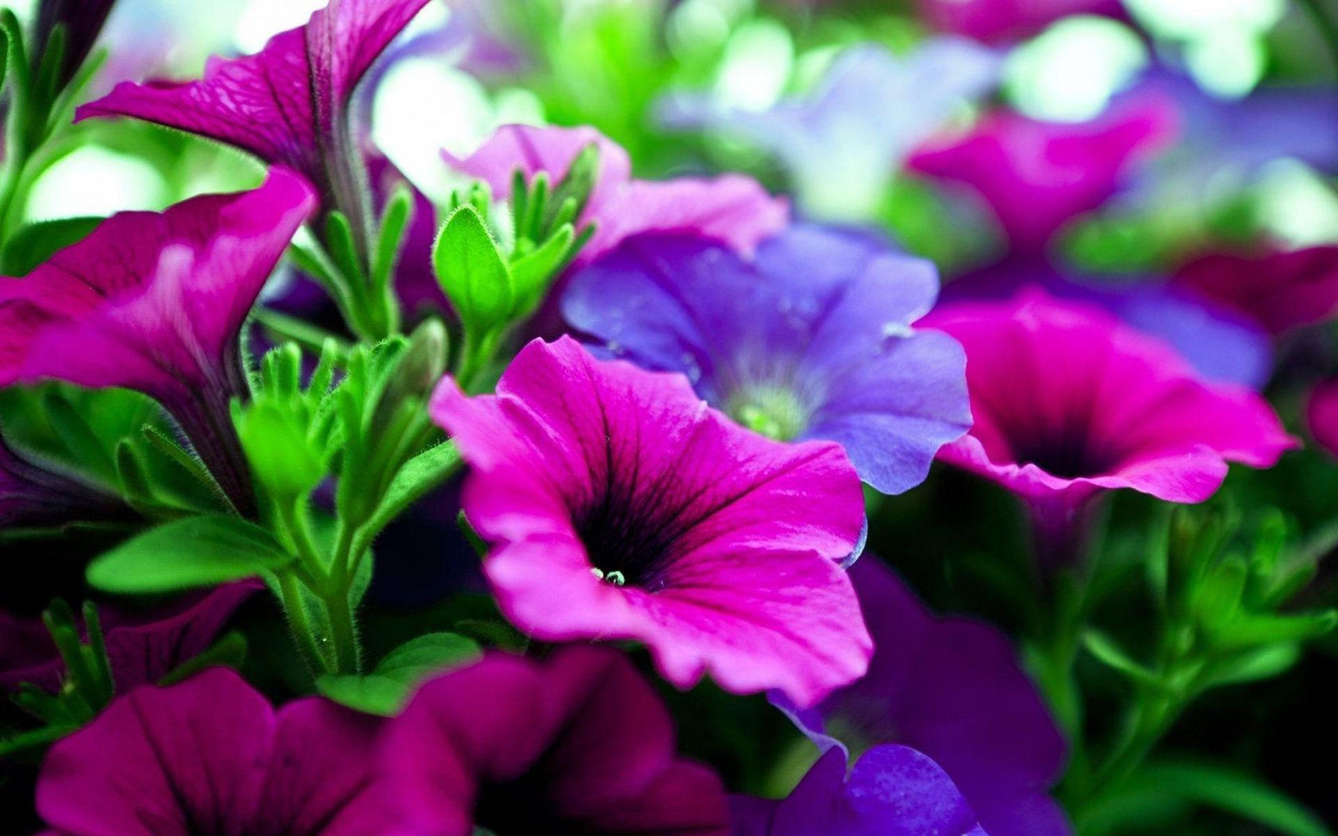 pink purple flowers hd - HD Desktop Wallpapers   4k HD