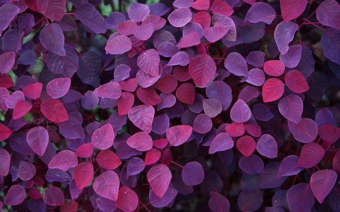 plant wallpaper purple
