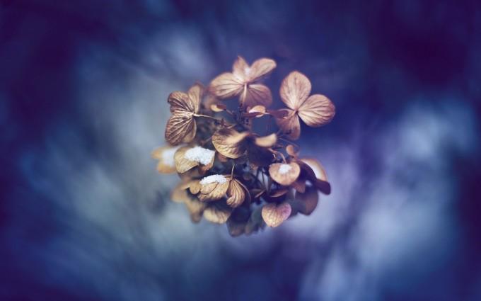 plants wallpaper dry