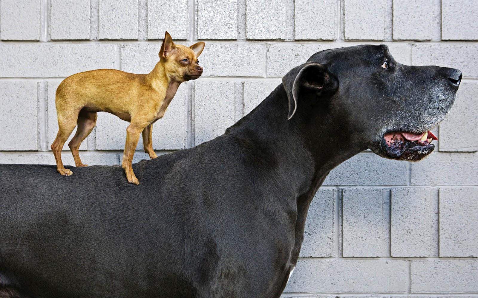 puppy desktop backgrounds