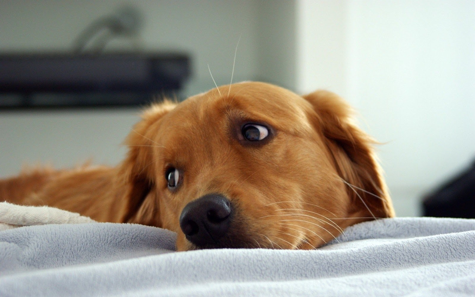 puppy hd images