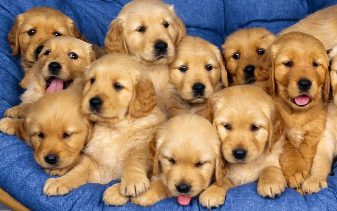 puppy wallpapers A4