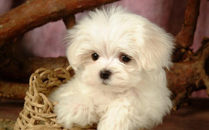 puppy wallpapers A5