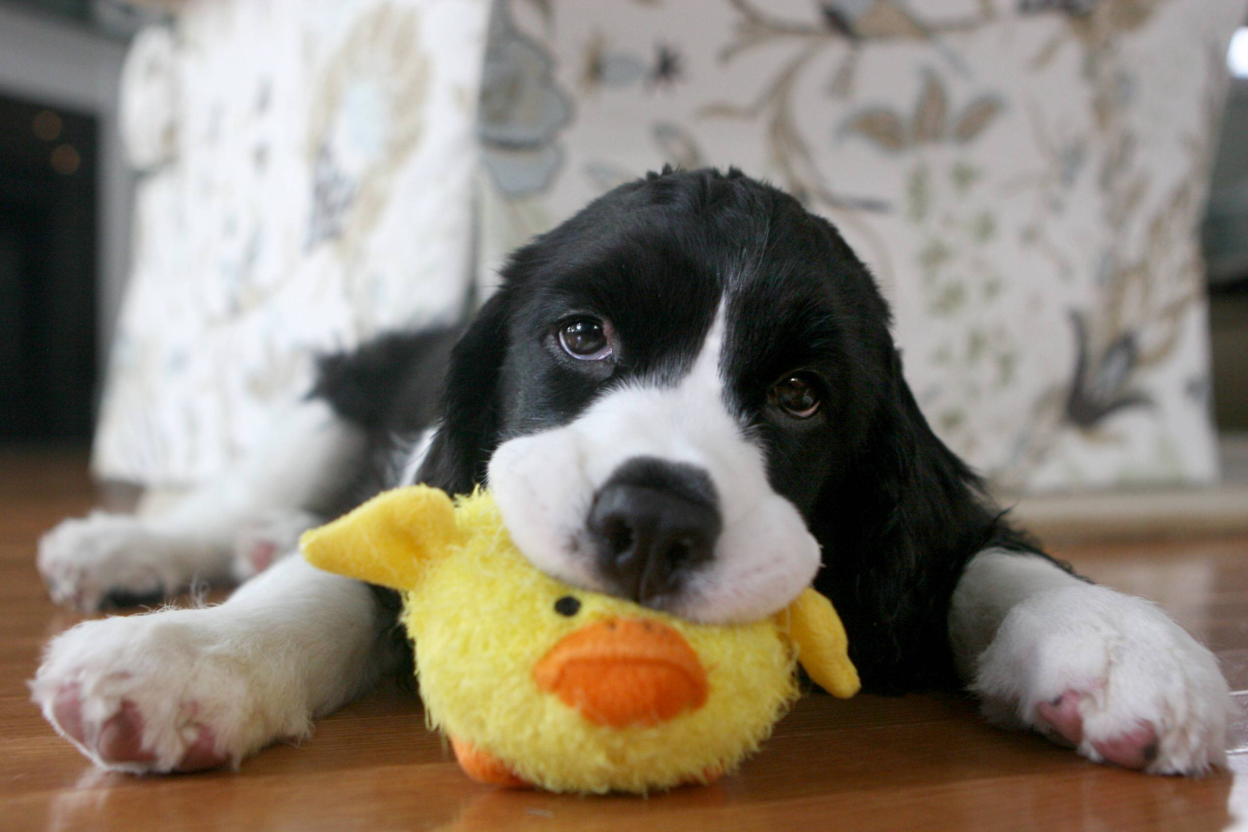 puppy wallpapers funny