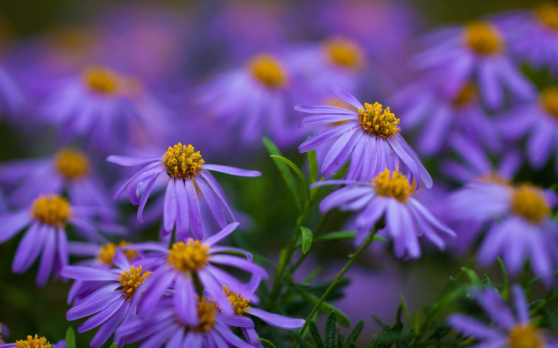 purple flower a1