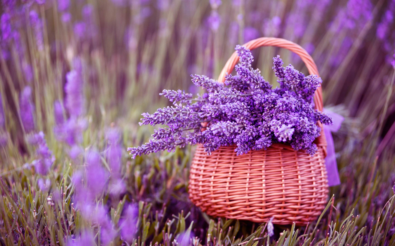 purple flowers cute