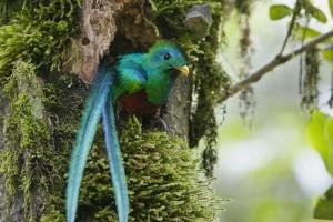 quetzal wallpapers