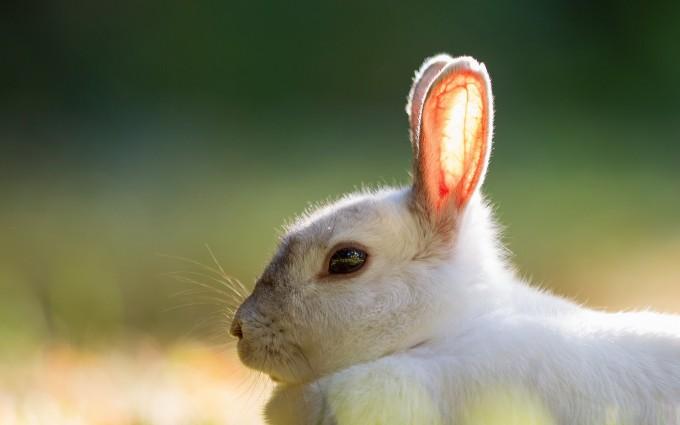 rabbit images download