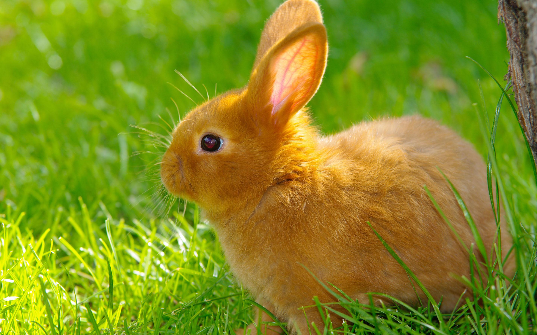 rabbit images